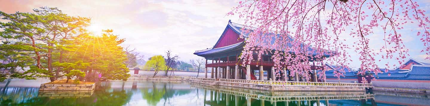 Cherry Blossom in Korean header of Rosetta Stone Korean Phrases page
