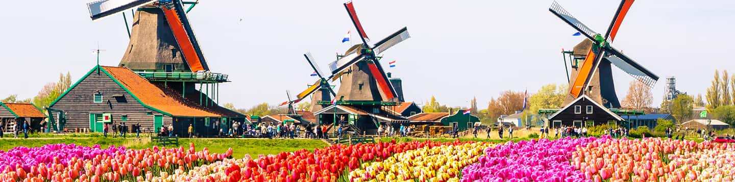 dutch flower field with windmill header of Rosetta Stone Learn Dutch page