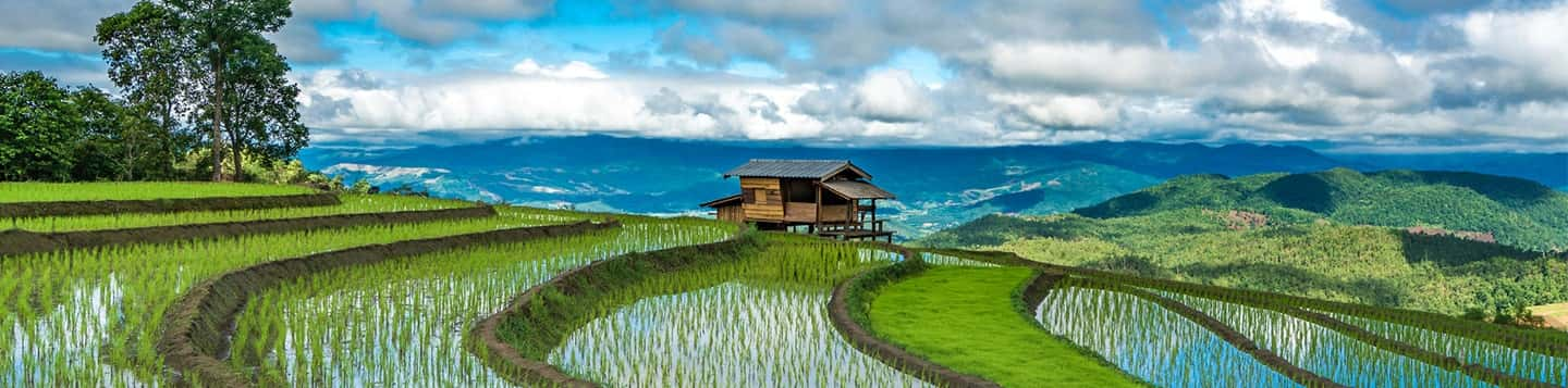 paddy field with ocean view header of Rosetta Stone What is the Tagalog language page